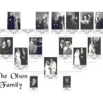 Olson Tree 2000
