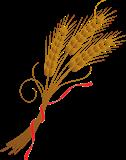 Spelt Wheat
